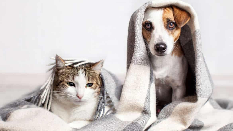 Hur städar man efter ett husdjur?